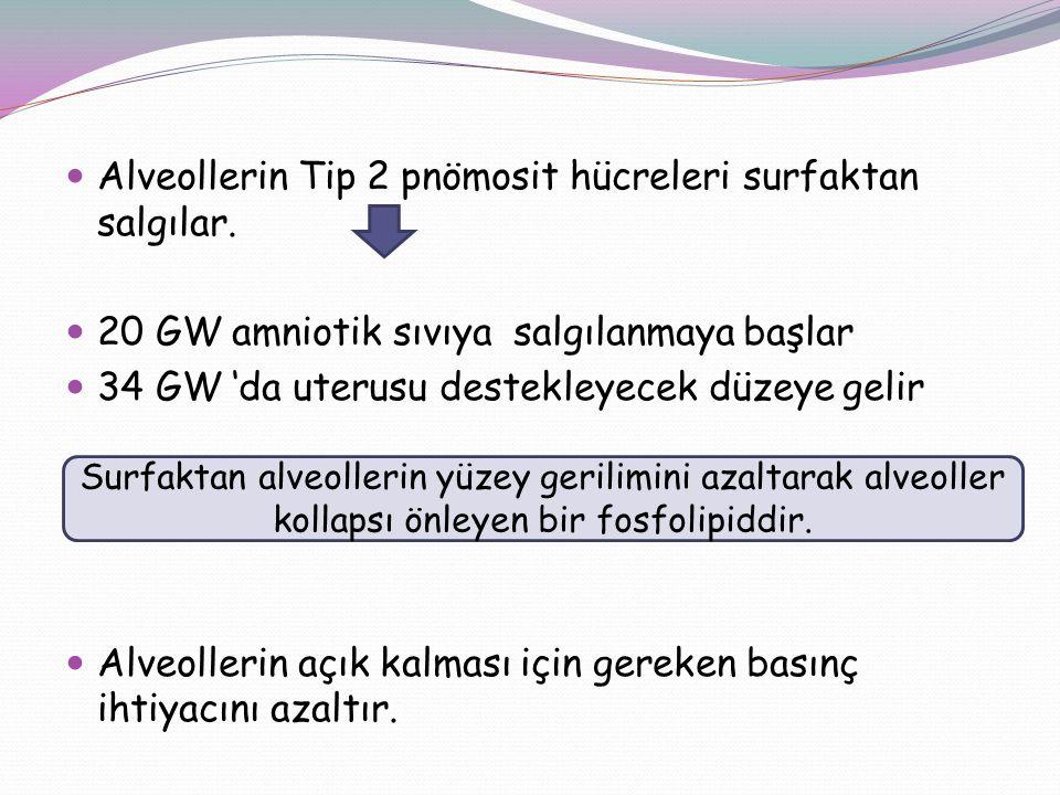 Alveollerin Tip 2 pnömosit hücreleri surfaktan salgılar. 20 GW amniotik sıvıya salgılanmaya başlar 34 GW 'da uterusu destekleyecek düzeye gelir Alveol