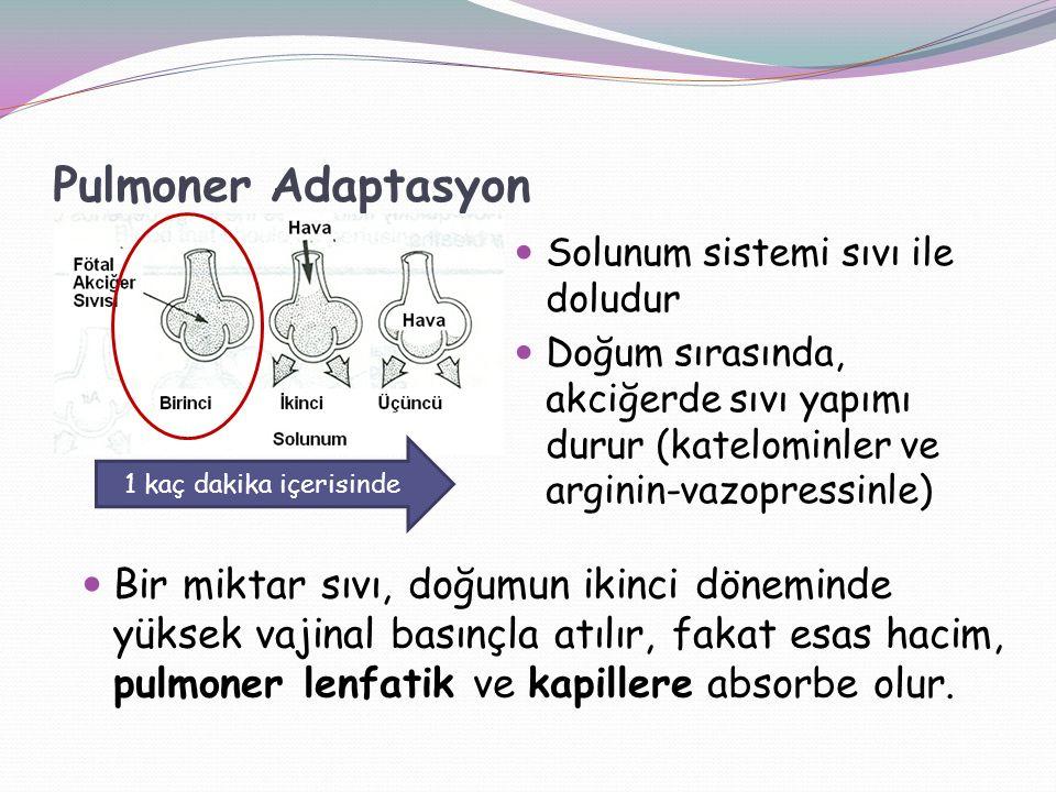 Pulmoner Adaptasyon Solunum sistemi sıvı ile doludur Doğum sırasında, akciğerde sıvı yapımı durur (katelominler ve arginin-vazopressinle) 1 kaç dakika içerisinde Bir miktar sıvı, doğumun ikinci döneminde yüksek vajinal basınçla atılır, fakat esas hacim, pulmoner lenfatik ve kapillere absorbe olur.