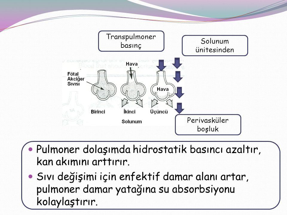 Transpulmoner basınç Pulmoner dolaşımda hidrostatik basıncı azaltır, kan akımını arttırır. Sıvı değişimi için enfektif damar alanı artar, pulmoner dam