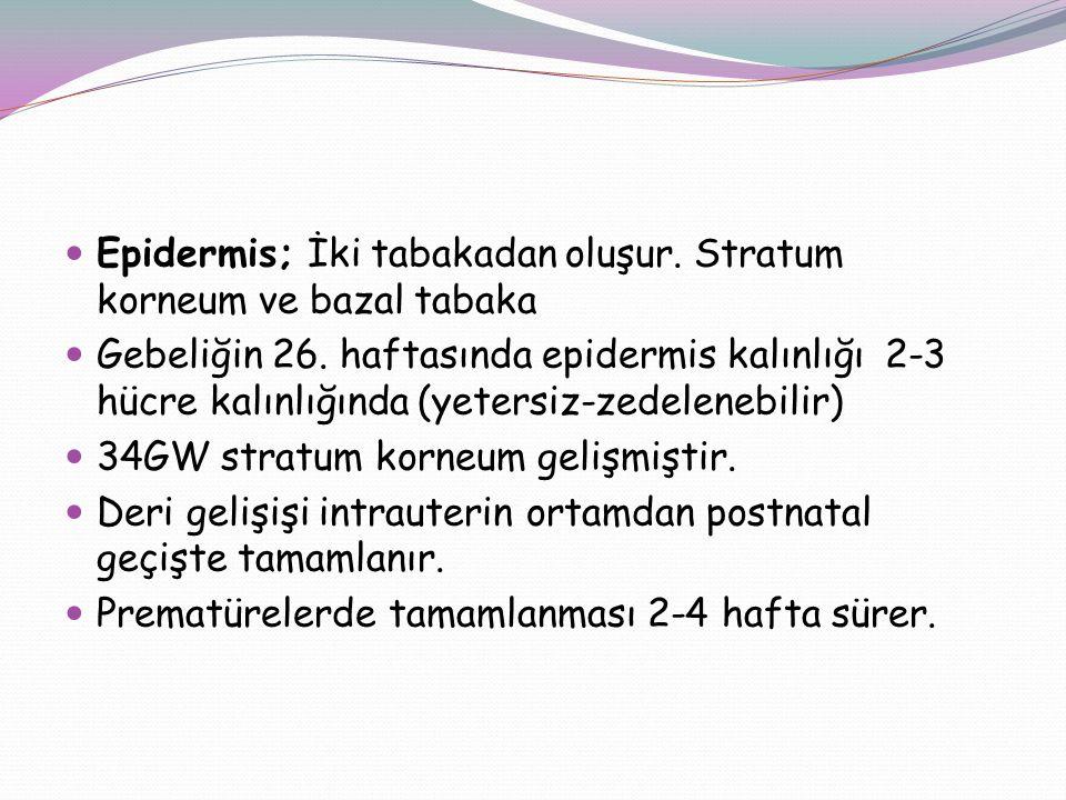 Epidermis; İki tabakadan oluşur. Stratum korneum ve bazal tabaka Gebeliğin 26. haftasında epidermis kalınlığı 2-3 hücre kalınlığında (yetersiz-zedelen