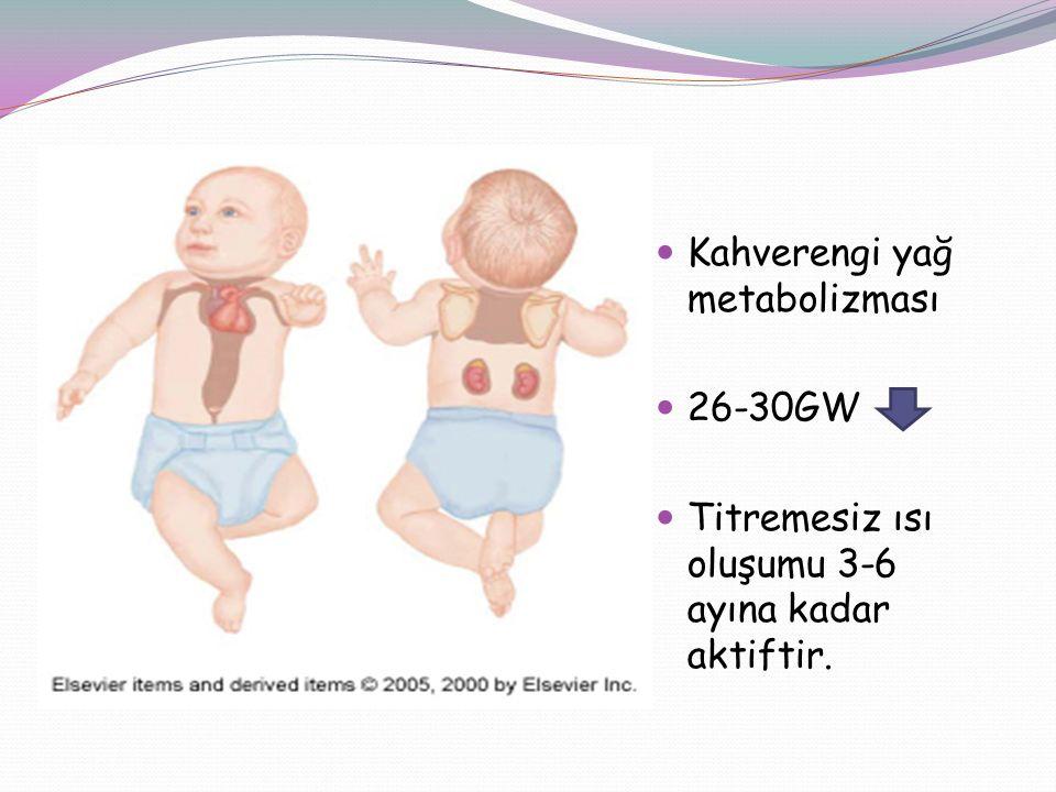Kahverengi yağ metabolizması 26-30GW Titremesiz ısı oluşumu 3-6 ayına kadar aktiftir.