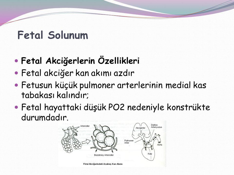 Fetal Akciğerlerin Özellikleri Fetal akciğer kan akımı azdır Fetusun küçük pulmoner arterlerinin medial kas tabakası kalındır; Fetal hayattaki düşük PO2 nedeniyle konstrükte durumdadır.