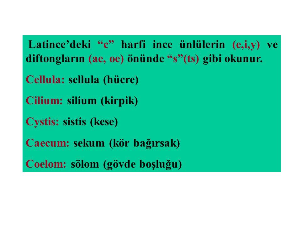 """Latince'deki """"c"""" harfi ince ünlülerin (e,i,y) ve diftongların (ae, oe) önünde """"s""""(ts) gibi okunur. Cellula: sellula (hücre) Cilium: silium (kirpik) Cy"""