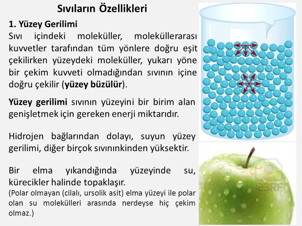Sıvıların Özellikleri 12 Yüzey gerilimi sıvının yüzeyini bir birim alan genişletmek için gereken enerji miktarıdır. Hidrojen bağlarından dolayı, suyun