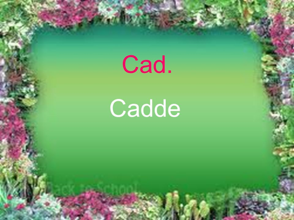 Cad. Cadde