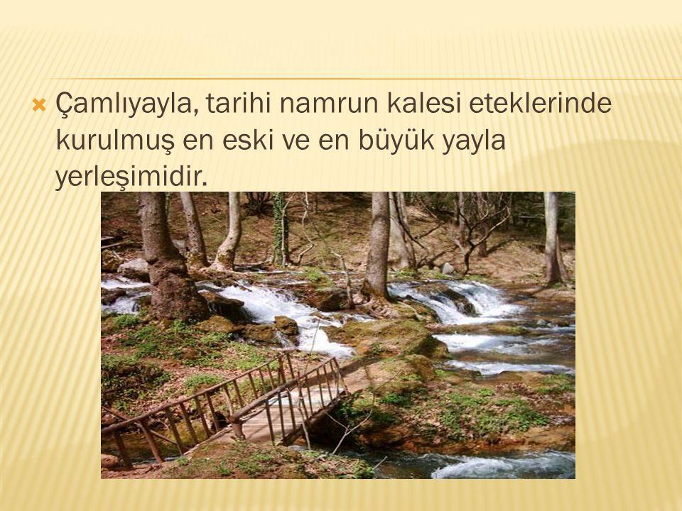  Çamlıyayla, tarihi namrun kalesi eteklerinde kurulmuş en eski ve en büyük yayla yerleşimidir.