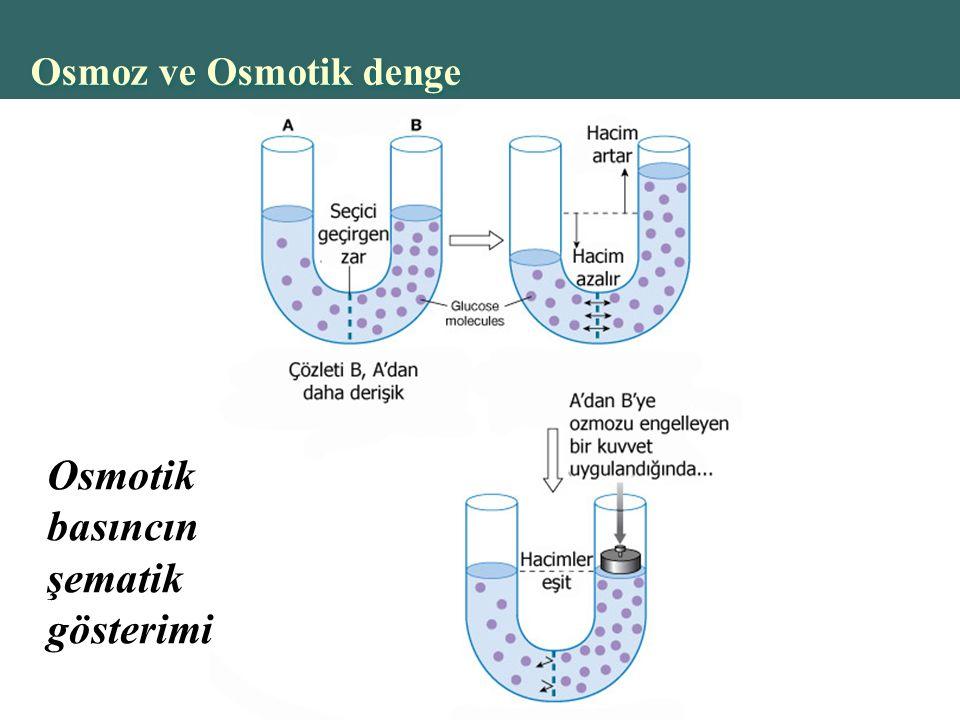 Copyright © 2004 Pearson Education, Inc., publishing as Benjamin Cummings Osmoz ve Osmotik denge Osmotik basıncın şematik gösterimi