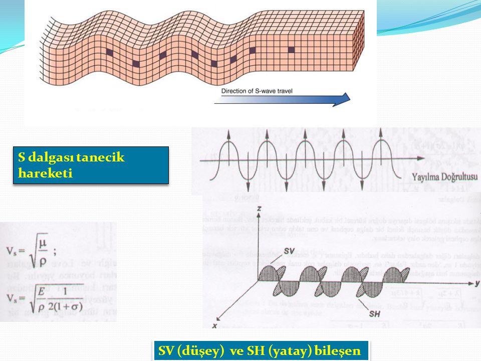 S dalgası tanecik hareketi SV (düşey) ve SH (yatay) bileşen