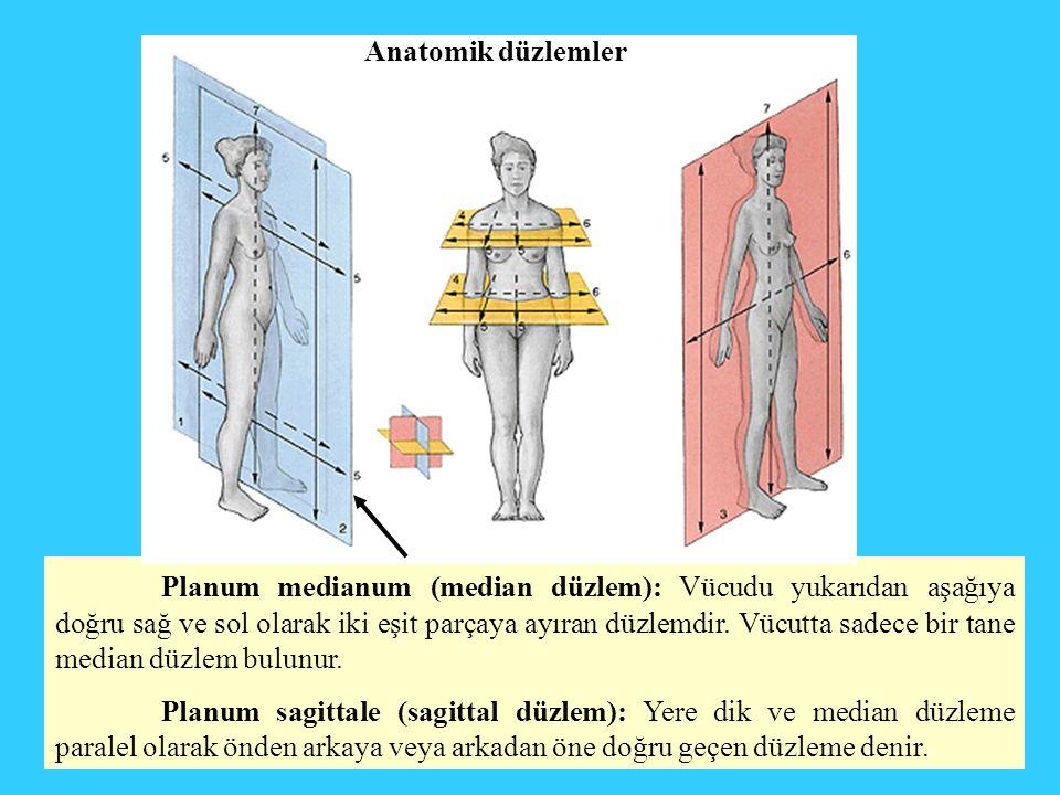 Planum medianum (median düzlem): Vücudu yukarıdan aşağıya doğru sağ ve sol olarak iki eşit parçaya ayıran düzlemdir. Vücutta sadece bir tane median dü