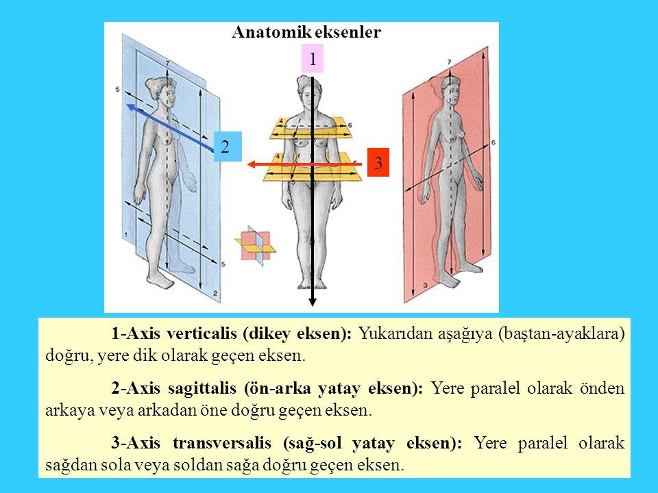 1-Axis verticalis (dikey eksen): Yukarıdan aşağıya (baştan-ayaklara) doğru, yere dik olarak geçen eksen. 2-Axis sagittalis (ön-arka yatay eksen): Yere