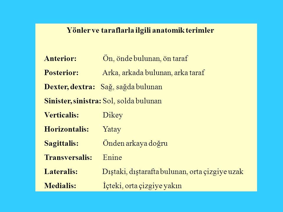 Yönler ve taraflarla ilgili anatomik terimler Anterior: Ön, önde bulunan, ön taraf Posterior: Arka, arkada bulunan, arka taraf Dexter, dextra: Sağ, sa