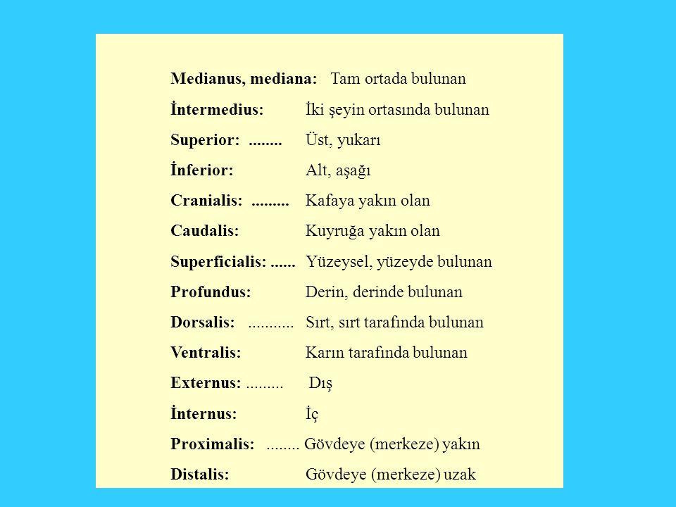 Medianus, mediana: Tam ortada bulunan İntermedius: İki şeyin ortasında bulunan Superior:........Üst, yukarı İnferior: Alt, aşağı Cranialis:......... K