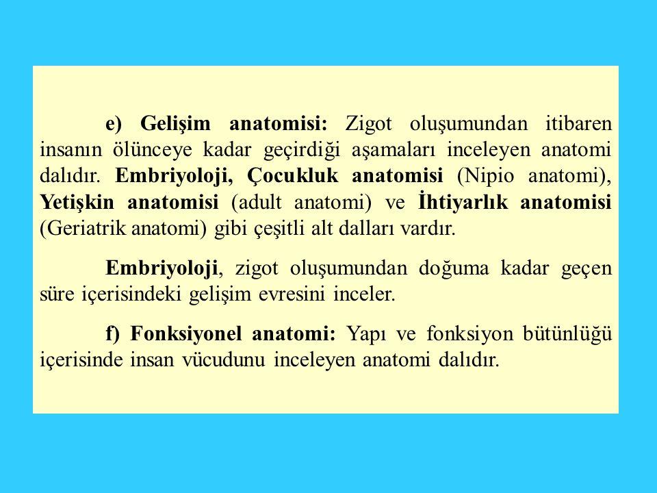 e) Gelişim anatomisi: Zigot oluşumundan itibaren insanın ölünceye kadar geçirdiği aşamaları inceleyen anatomi dalıdır. Embriyoloji, Çocukluk anatomisi