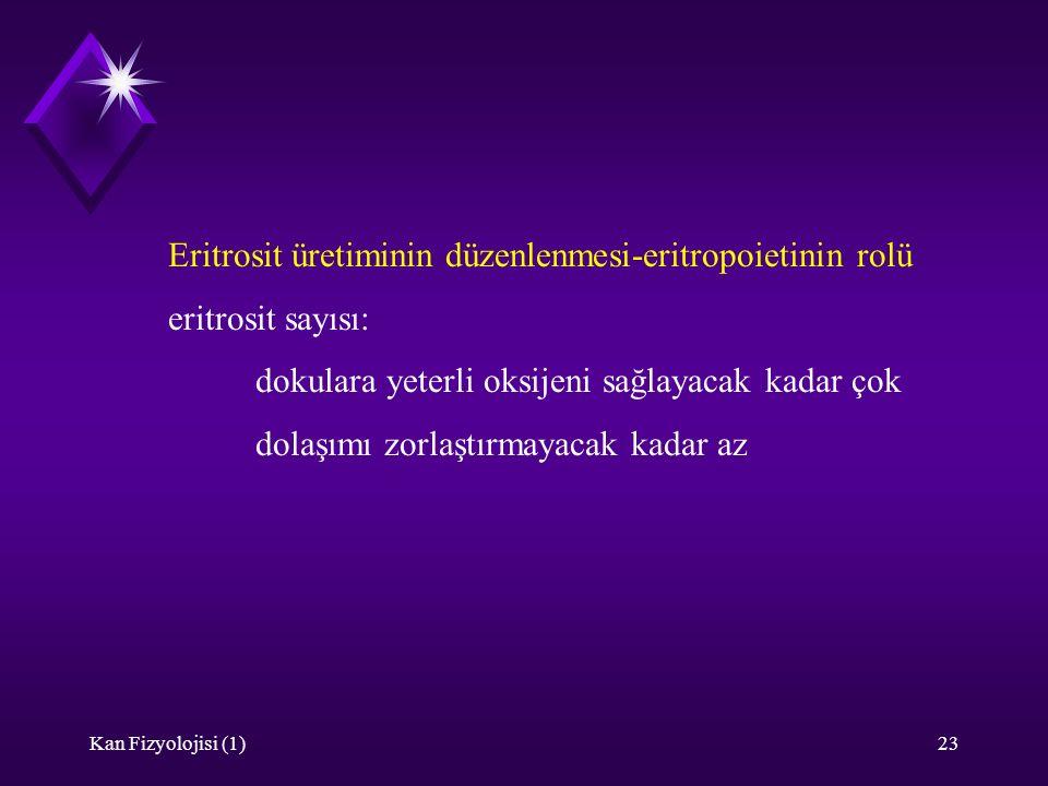 Kan Fizyolojisi (1)23 Eritrosit üretiminin düzenlenmesi-eritropoietinin rolü eritrosit sayısı: dokulara yeterli oksijeni sağlayacak kadar çok dolaşımı