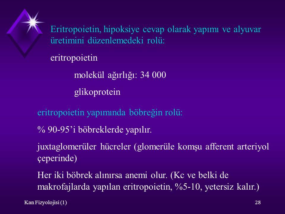 Kan Fizyolojisi (1)28 Eritropoietin, hipoksiye cevap olarak yapımı ve alyuvar üretimini düzenlemedeki rolü: eritropoietin molekül ağırlığı: 34 000 gli