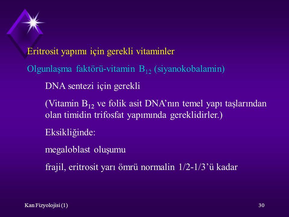Kan Fizyolojisi (1)30 Eritrosit yapımı için gerekli vitaminler Olgunlaşma faktörü-vitamin B 12 (siyanokobalamin) DNA sentezi için gerekli (Vitamin B 1
