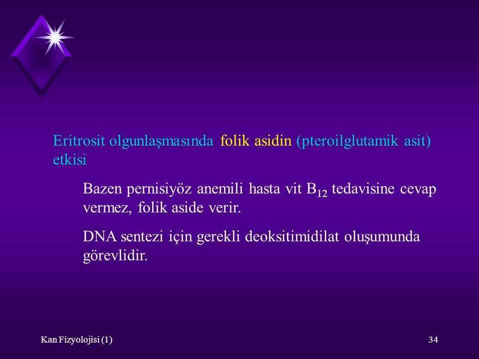 Kan Fizyolojisi (1)34 Eritrosit olgunlaşmasında folik asidin (pteroilglutamik asit) etkisi Bazen pernisiyöz anemili hasta vit B 12 tedavisine cevap ve