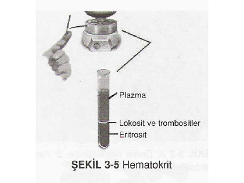 Kan Fizyolojisi (1)30 Eritrosit yapımı için gerekli vitaminler Olgunlaşma faktörü-vitamin B 12 (siyanokobalamin) DNA sentezi için gerekli (Vitamin B 12 ve folik asit DNA'nın temel yapı taşlarından olan timidin trifosfat yapımında gereklidirler.) Eksikliğinde: megaloblast oluşumu frajil, eritrosit yarı ömrü normalin 1/2-1/3'ü kadar