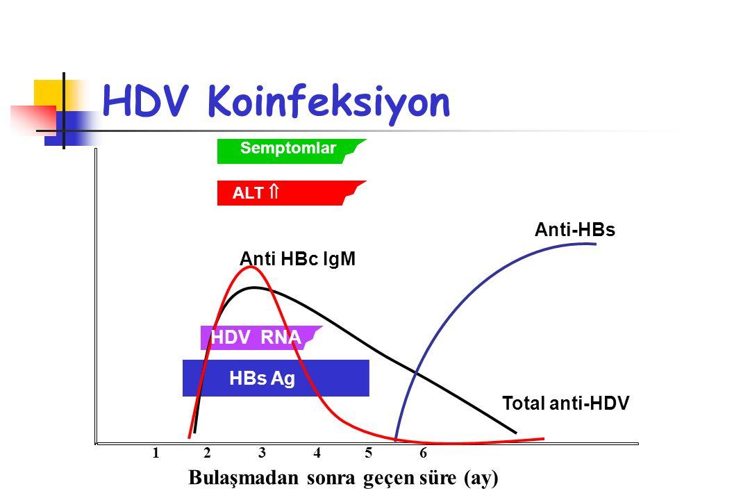 HDV Koinfeksiyon Anti-HBs Total anti-HDV Anti HBc IgM HBs Ag Semptomlar ALT  HDV RNA Bulaşmadan sonra geçen süre (ay) 1 2 3 4 5 6