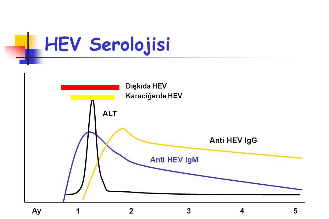 HEV Serolojisi Ay 1 2 3 4 5 ALT Dışkıda HEV Karaciğerde HEV Anti HEV IgM Anti HEV IgG