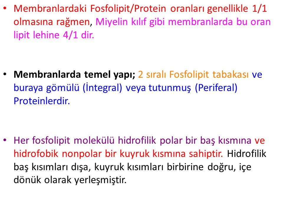 Membranlardaki Fosfolipit/Protein oranları genellikle 1/1 olmasına rağmen, Miyelin kılıf gibi membranlarda bu oran lipit lehine 4/1 dir. Membranlarda