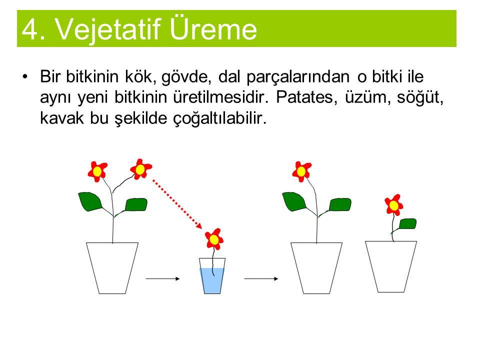Bir bitkinin kök, gövde, dal parçalarından o bitki ile aynı yeni bitkinin üretilmesidir.