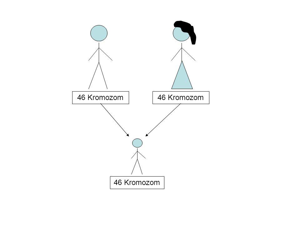 46 Kromozom