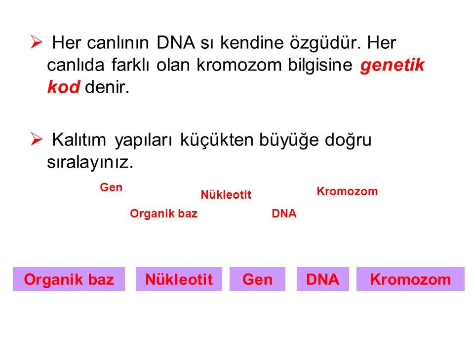  Her canlının DNA sı kendine özgüdür.