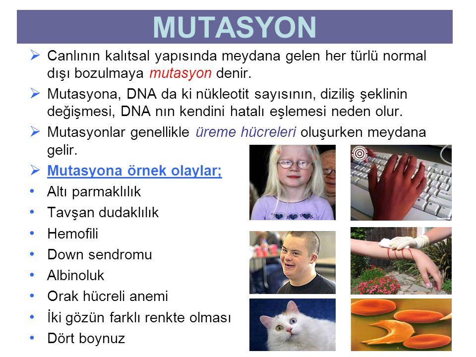  Canlının kalıtsal yapısında meydana gelen her türlü normal dışı bozulmaya mutasyon denir.