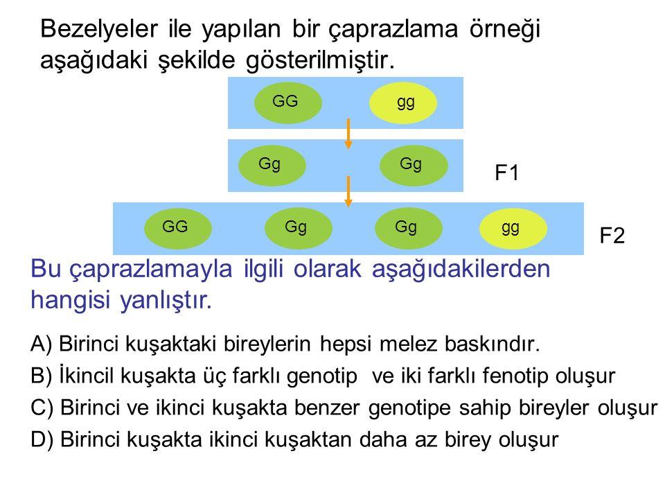 Bezelyeler ile yapılan bir çaprazlama örneği aşağıdaki şekilde gösterilmiştir.