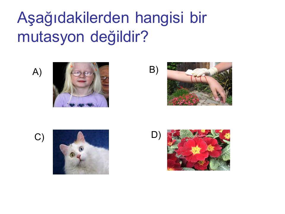 Aşağıdakilerden hangisi bir mutasyon değildir? A) B) C) D)