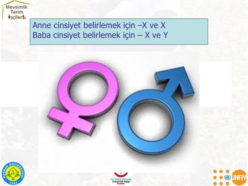 Anne cinsiyet belirlemek için –X ve X Baba cinsiyet belirlemek için – X ve Y