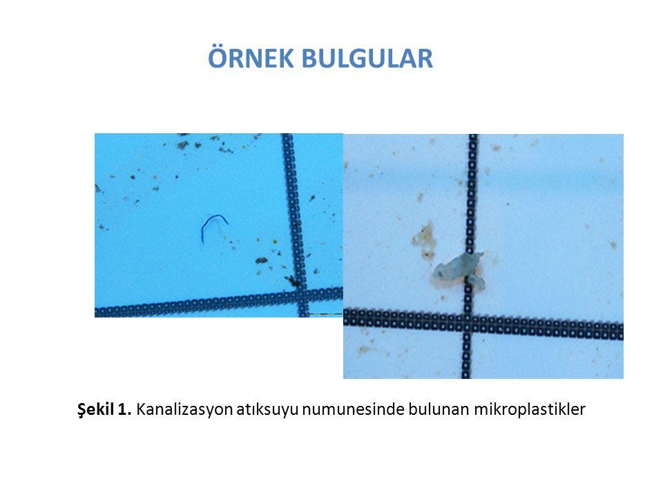 ÖRNEK BULGULAR Şekil 1. Kanalizasyon atıksuyu numunesinde bulunan mikroplastikler