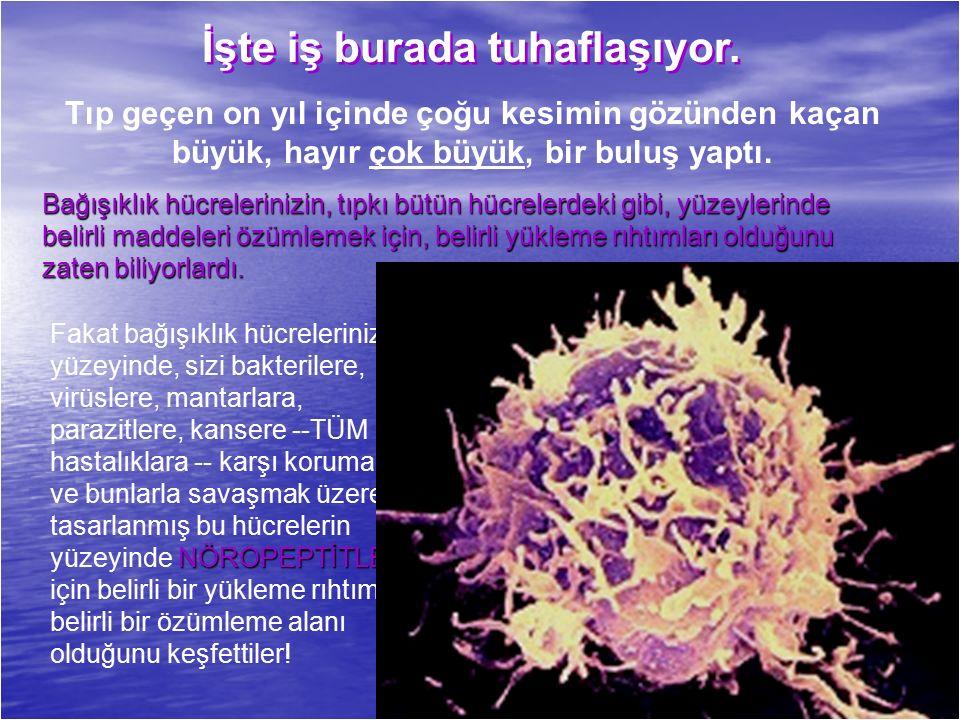 NÖROPEPTİTLER Fakat bağışıklık hücrelerinizin yüzeyinde, sizi bakterilere, virüslere, mantarlara, parazitlere, kansere --TÜM hastalıklara -- karşı korumak ve bunlarla savaşmak üzere tasarlanmış bu hücrelerin yüzeyinde NÖROPEPTİTLER için belirli bir yükleme rıhtımı, belirli bir özümleme alanı olduğunu keşfettiler.