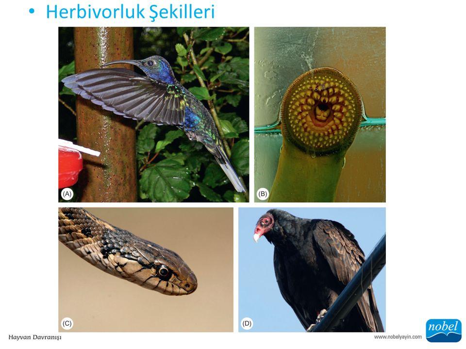 ŞEKİL 9.3 Bu örneklerde görüldüğü gibi, hayvanların besin arama şekilleri sanılanın ötesinde çeşitlidir.