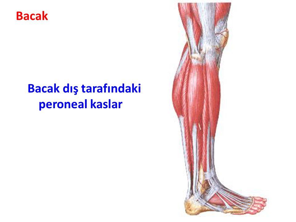Bacak dış tarafındaki peroneal kaslar Bacak