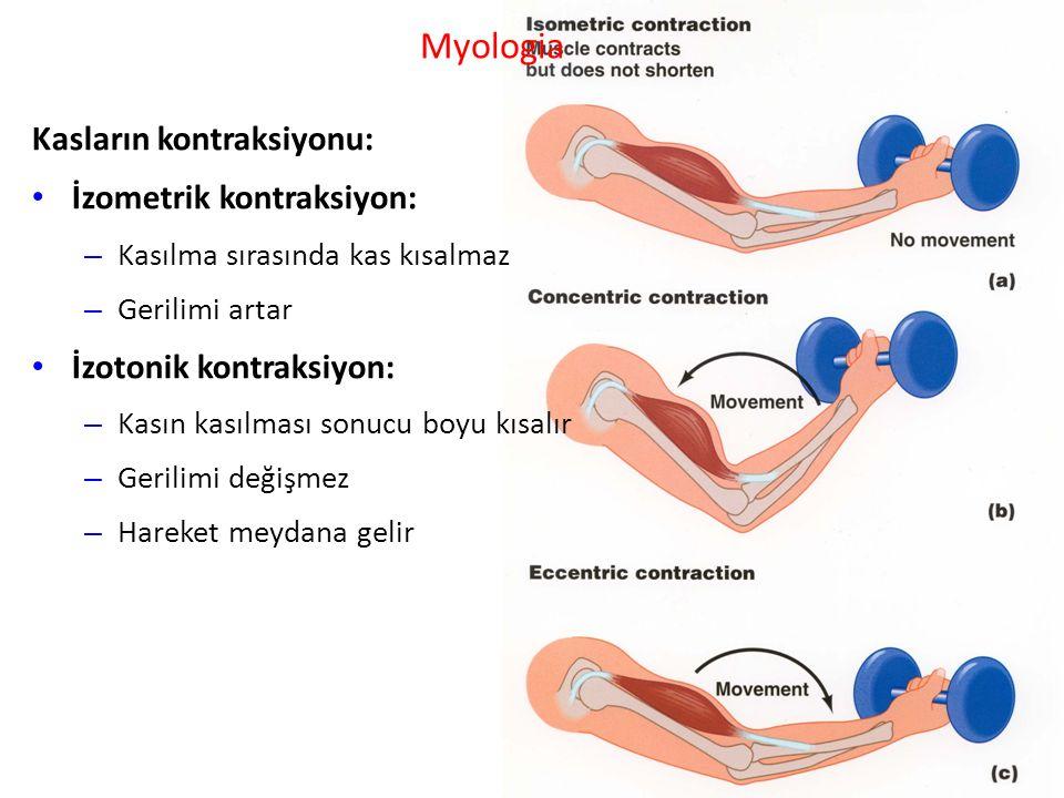 Myologia Kasların kontraksiyonu: İzometrik kontraksiyon: – Kasılma sırasında kas kısalmaz – Gerilimi artar İzotonik kontraksiyon: – Kasın kasılması sonucu boyu kısalır – Gerilimi değişmez – Hareket meydana gelir