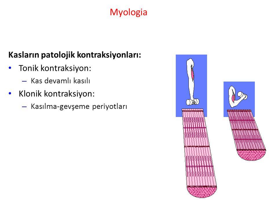 Myologia Kasların patolojik kontraksiyonları: Tonik kontraksiyon: – Kas devamlı kasılı Klonik kontraksiyon: – Kasılma-gevşeme periyotları