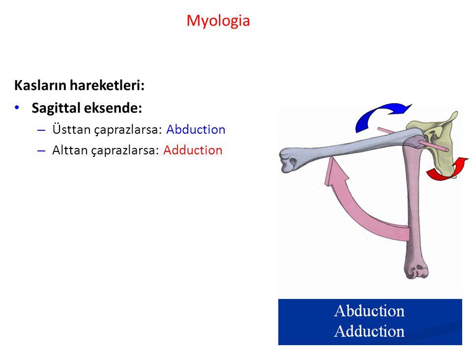 Myologia Kasların hareketleri: Sagittal eksende: – Üsttan çaprazlarsa: Abduction – Alttan çaprazlarsa: Adduction