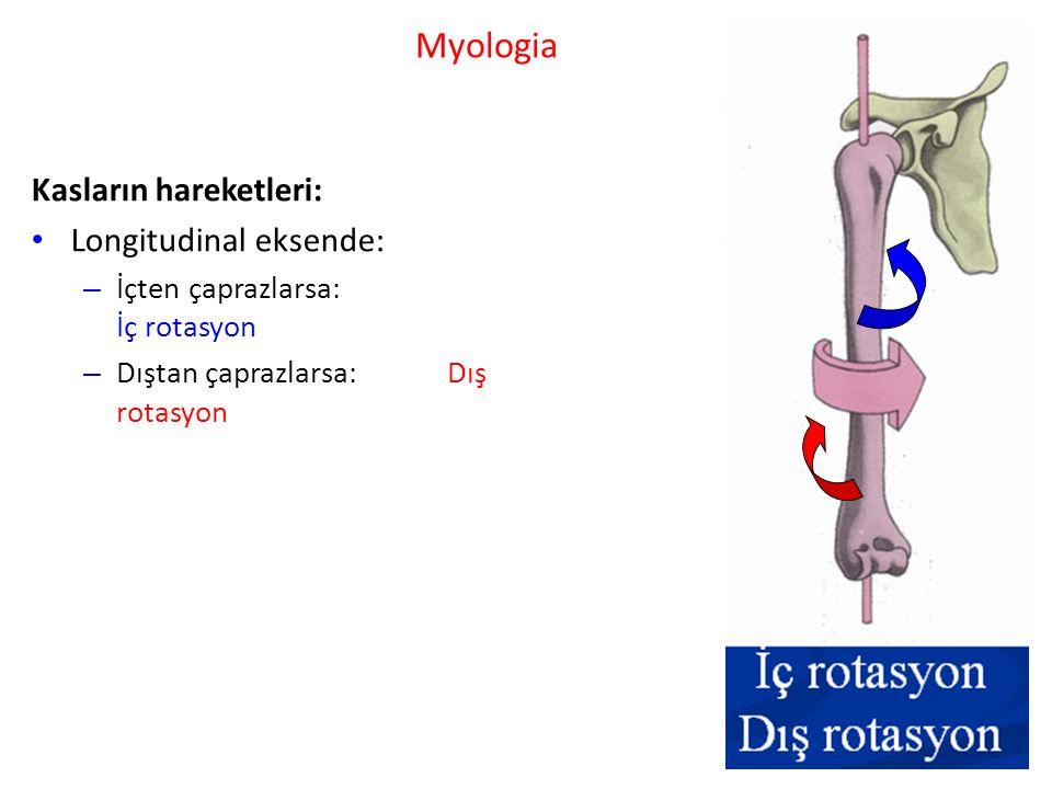 Myologia Kasların hareketleri: Longitudinal eksende: – İçten çaprazlarsa: İç rotasyon – Dıştan çaprazlarsa: Dış rotasyon
