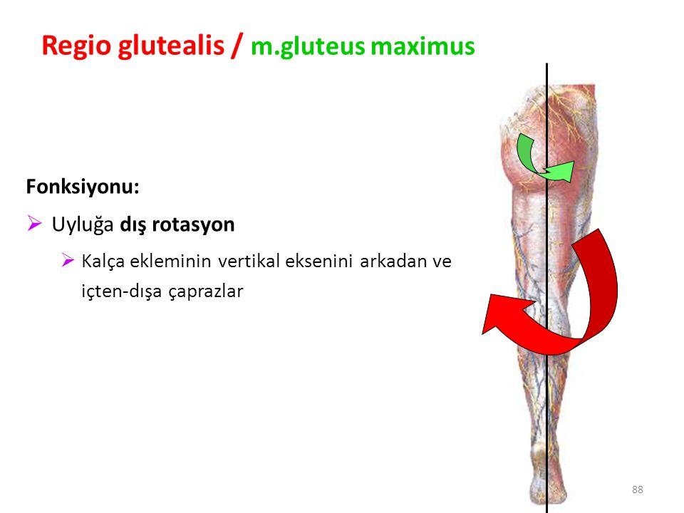 88 Regio glutealis / m.gluteus maximus Fonksiyonu:  Uyluğa dış rotasyon  Kalça ekleminin vertikal eksenini arkadan ve içten-dışa çaprazlar