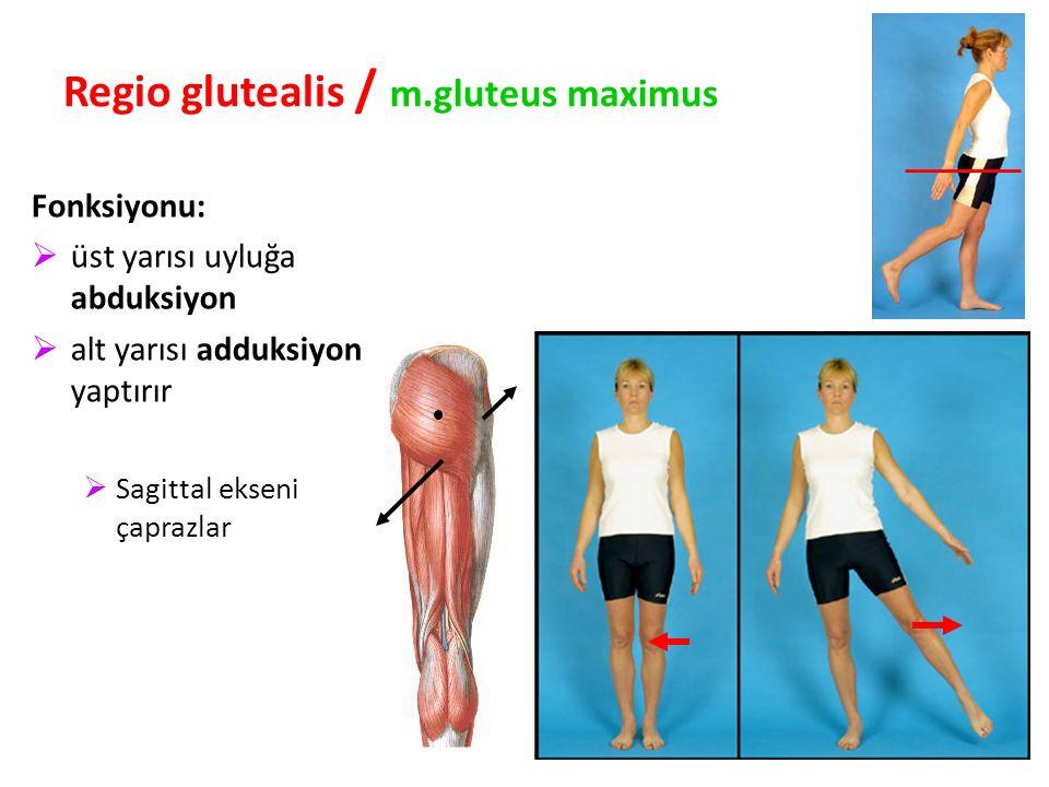 89 Regio glutealis / m.gluteus maximus Fonksiyonu:  üst yarısı uyluğa abduksiyon  alt yarısı adduksiyon yaptırır  Sagittal ekseni çaprazlar