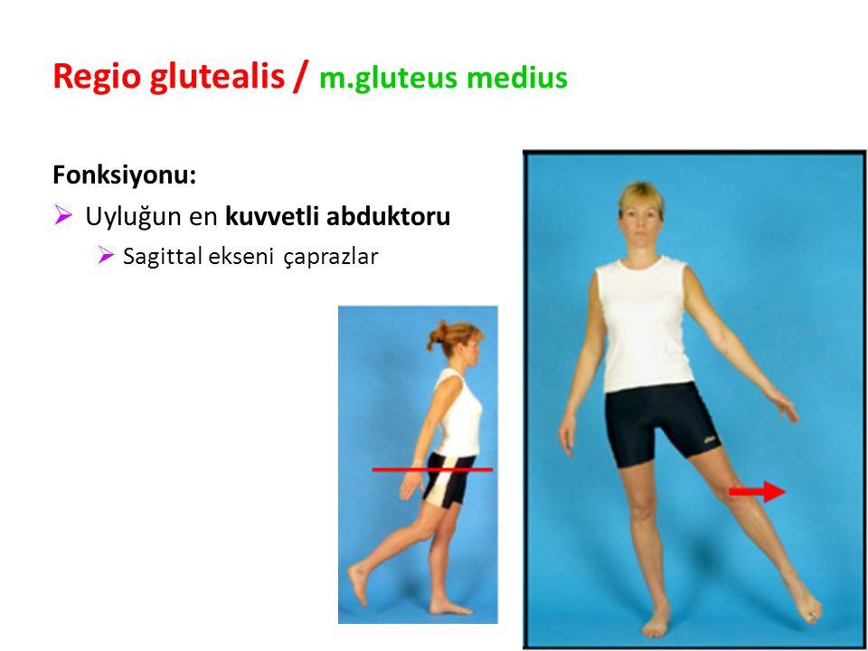 90 Regio glutealis / m.gluteus medius Fonksiyonu:  Uyluğun en kuvvetli abduktoru  Sagittal ekseni çaprazlar