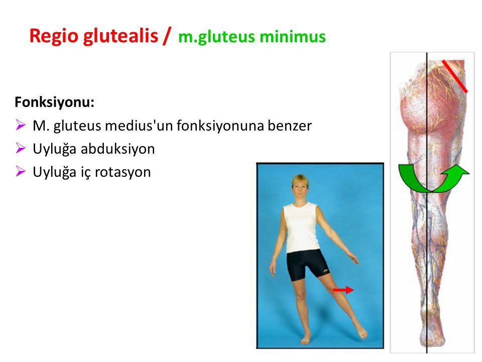 92 Regio glutealis / m.gluteus minimus Fonksiyonu:  M.