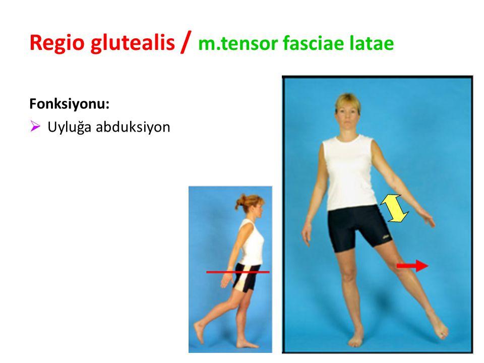 95 Regio glutealis / m.tensor fasciae latae Fonksiyonu:  Uyluğa abduksiyon