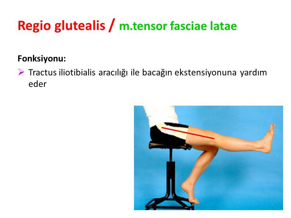 96 Regio glutealis / m.tensor fasciae latae Fonksiyonu:  Tractus iliotibialis aracılığı ile bacağın ekstensiyonuna yardım eder
