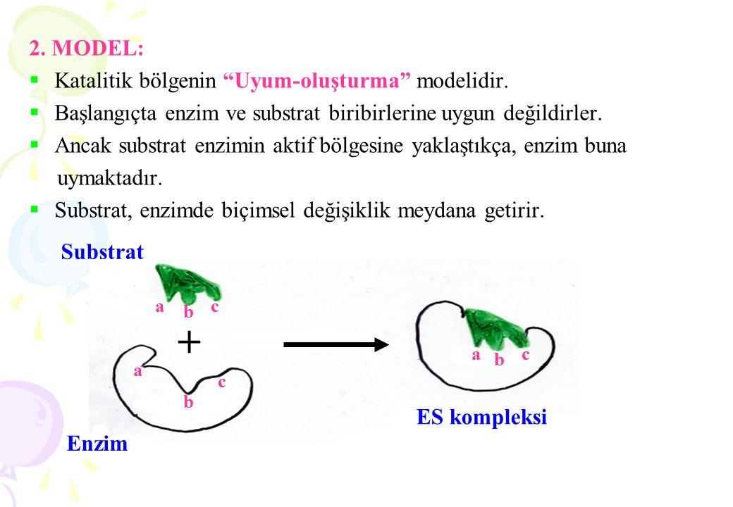 """2. MODEL:  Katalitik bölgenin """"Uyum-oluşturma"""" modelidir.  Başlangıçta enzim ve substrat biribirlerine uygun değildirler.  Ancak substrat enzimin a"""