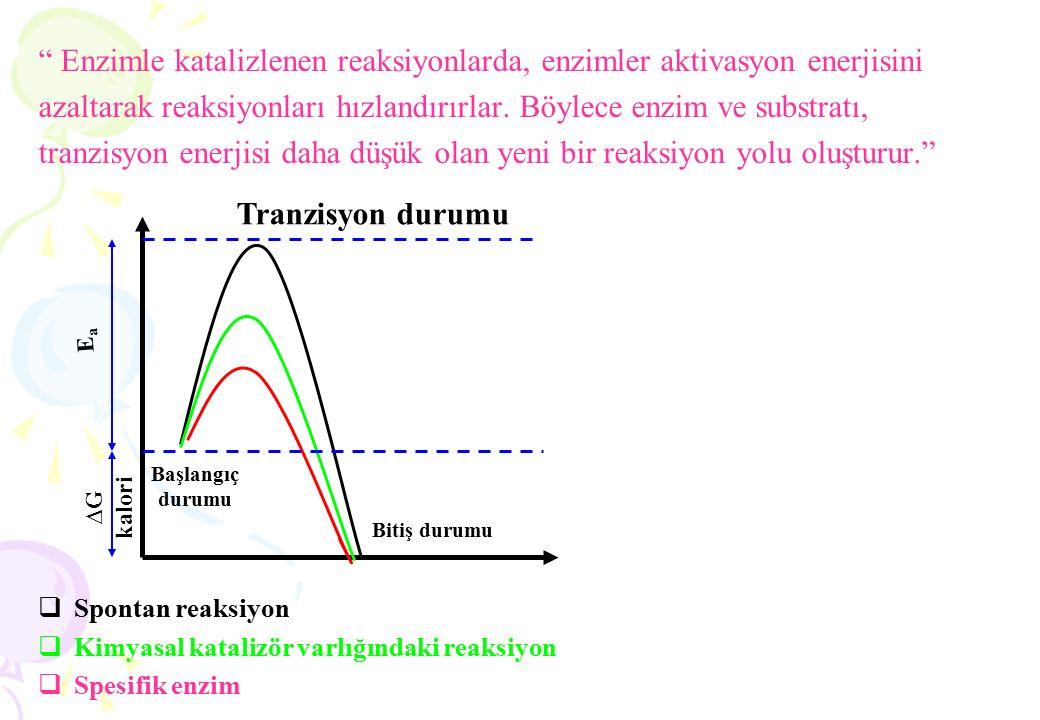 """"""" Enzimle katalizlenen reaksiyonlarda, enzimler aktivasyon enerjisini azaltarak reaksiyonları hızlandırırlar. Böylece enzim ve substratı, tranzisyon e"""