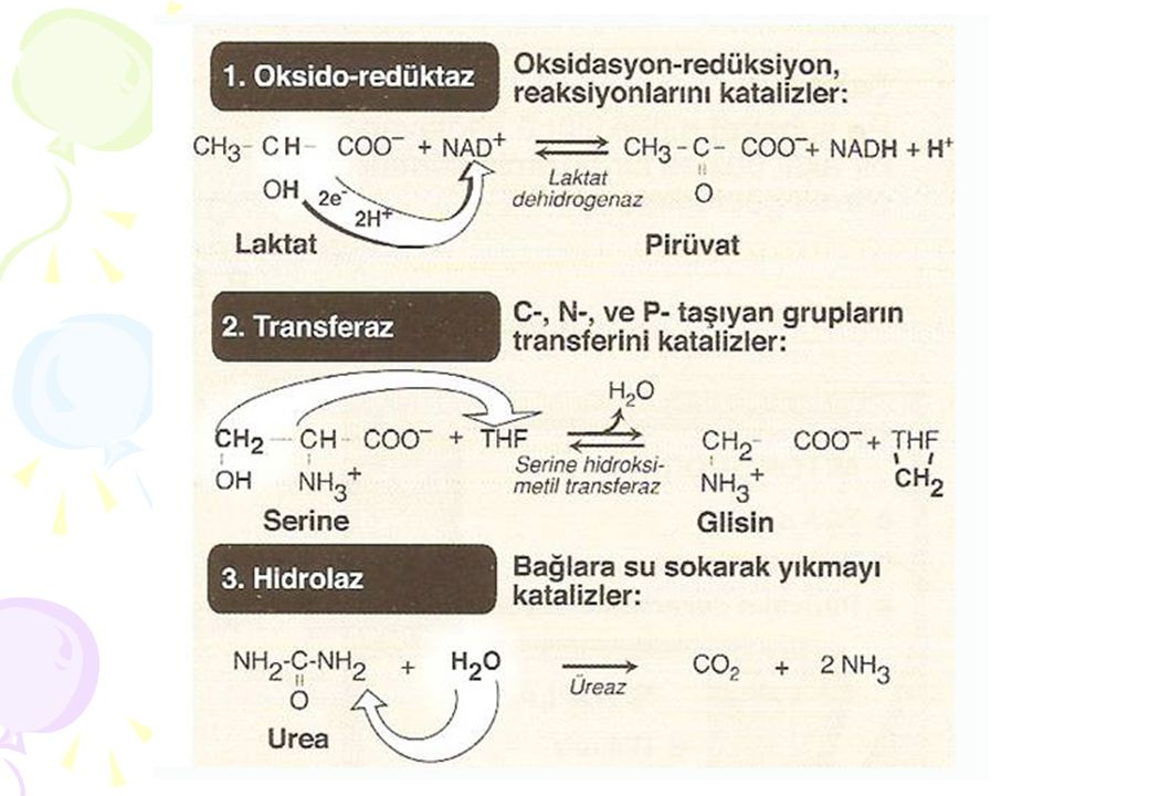 reaksiyon hızı (v) O O 50 100 denatüre olmamış protein yüzdesi 2030 40 5060 sıcaklık (ºC)