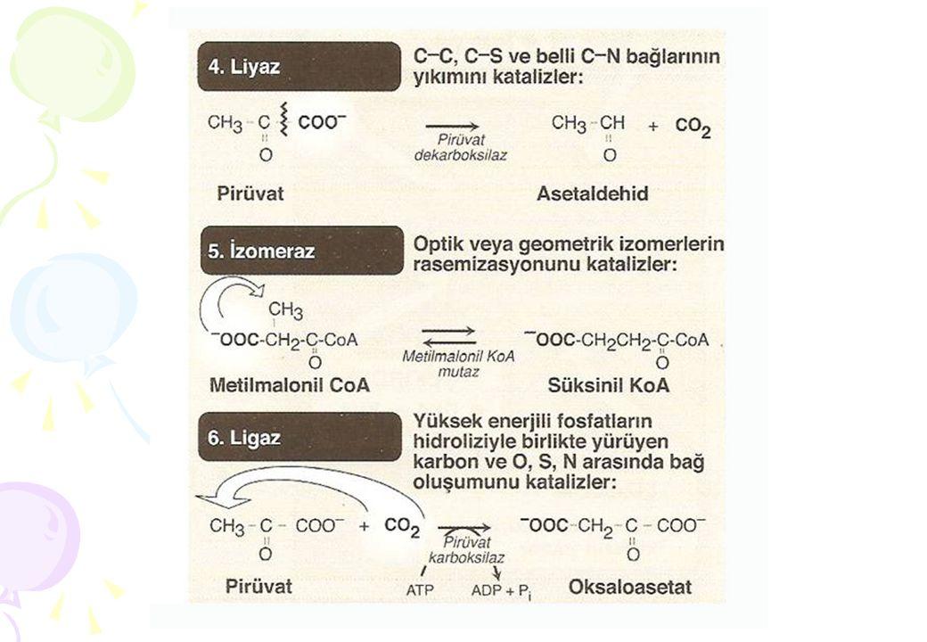 K m Değerinin Bilinmesinin Önemi  Enzimlerin Saflaştırılması  Dokularda enzim aktivitesinin saptanması  İlaç imalatında  Enzim inhibitörlerinin belirlenmesi